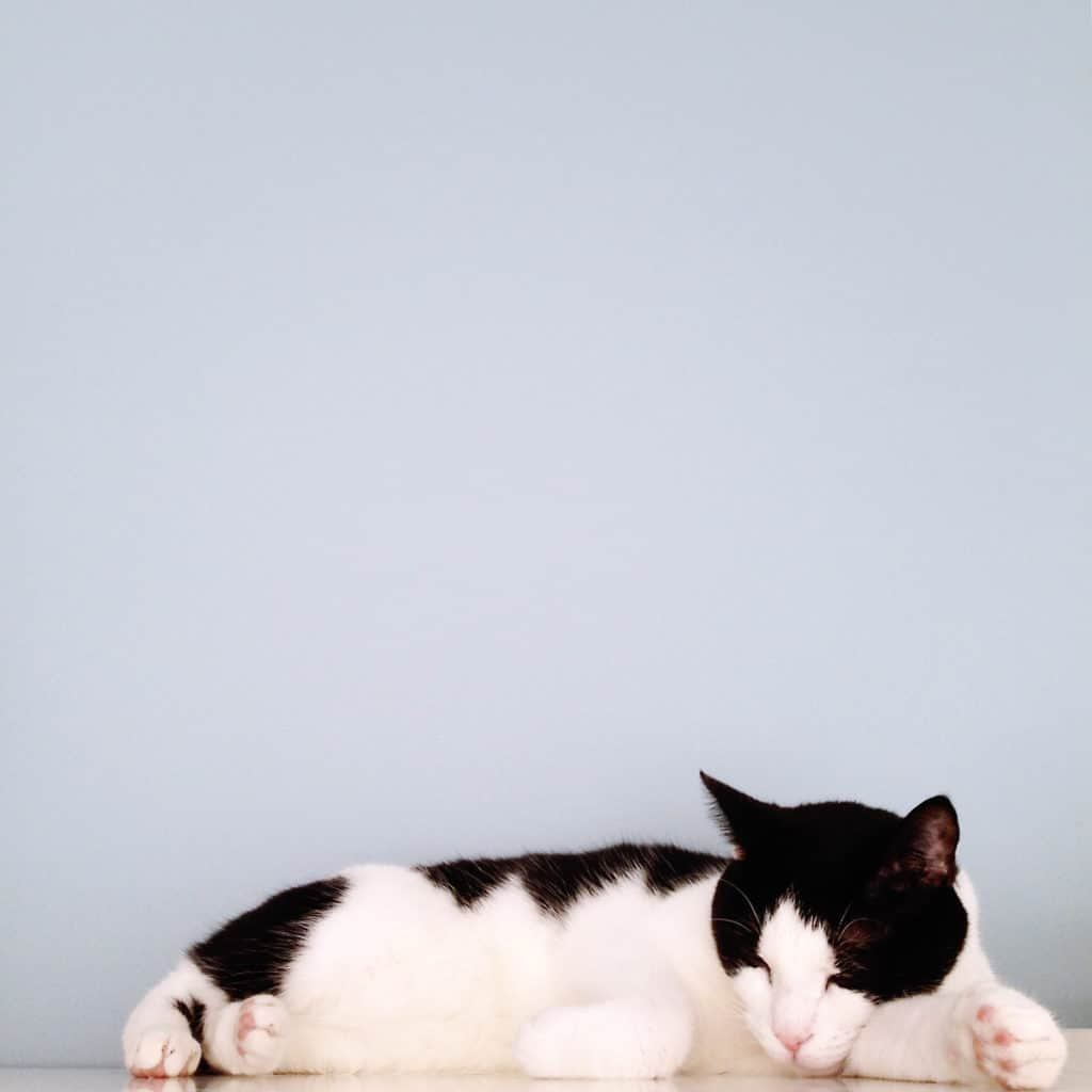 cats, kitty, cat bed, cat toy, cat birthday