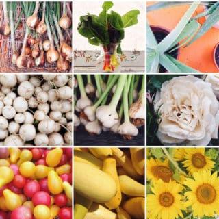 Farmers Market in Color