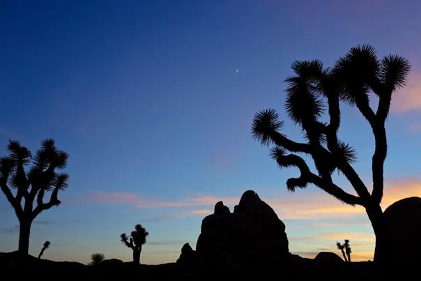 Hidden Gems: Las Vegas Travel Guide // Feast + West