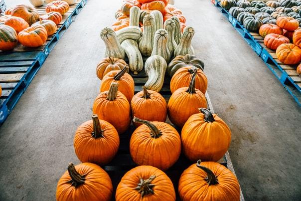 Nashville Farmers Market | Hidden Gems: Nashville Travel Guide // feastandwest.com