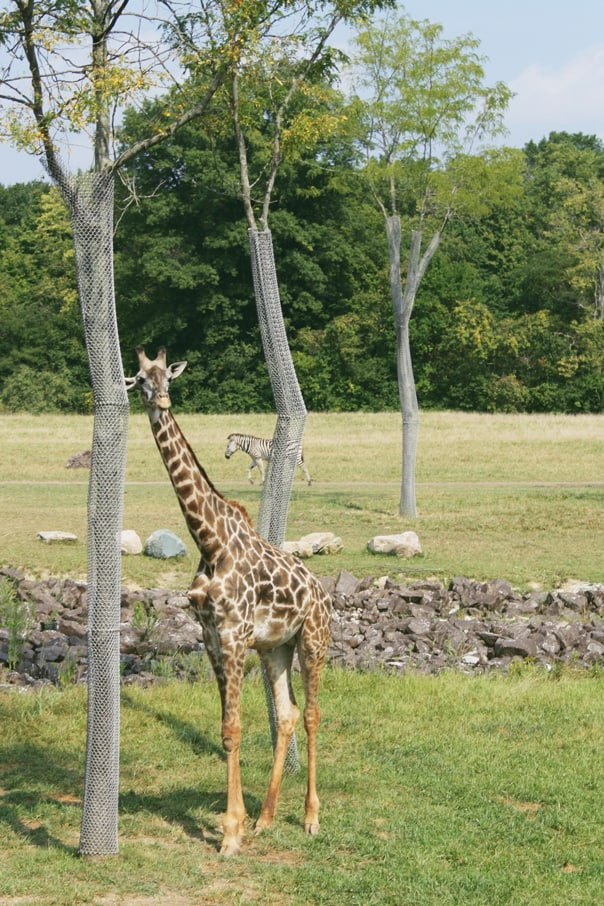 Columbus Zoo | Hidden Gems: Columbus, Ohio Travel Guide // Feast + West