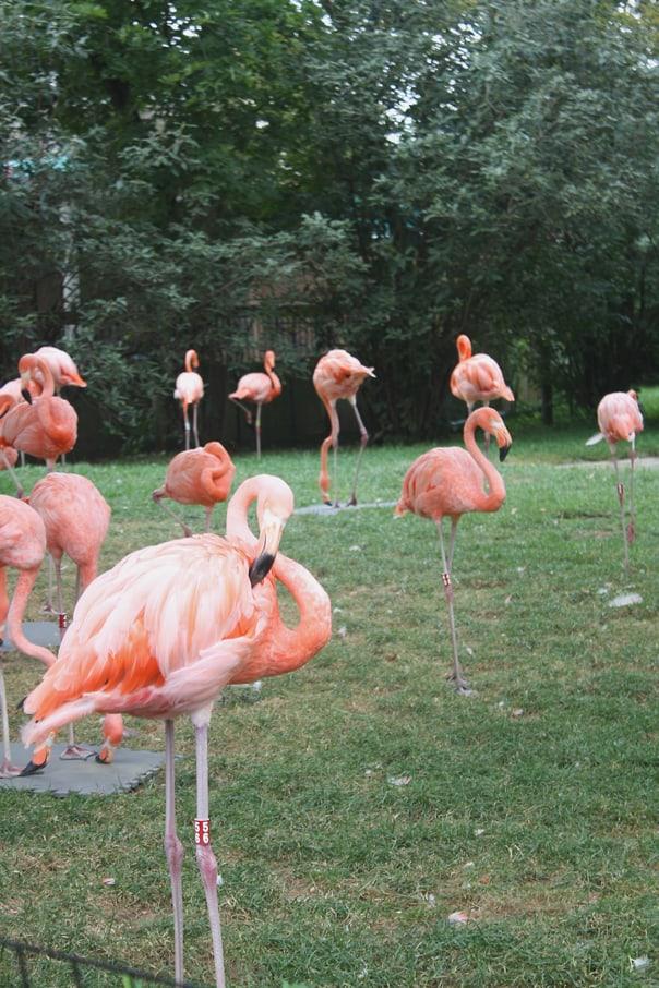 Columbus Zoo | Hidden Gems: Columbus, Ohio Travel Guide // Feast + West