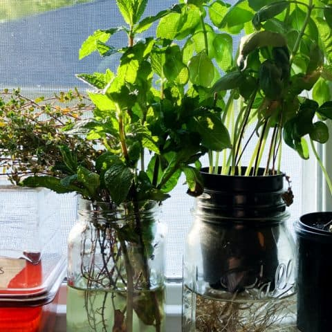 How to Start A Cocktail Herb Garden