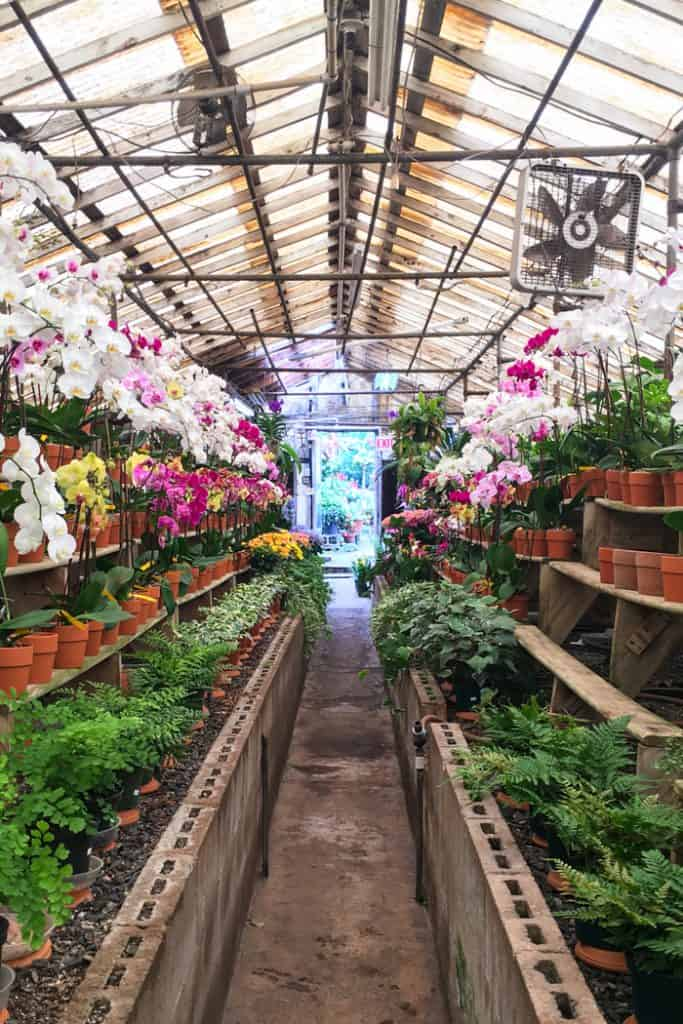 view of a greenhouse with orchids and other plants