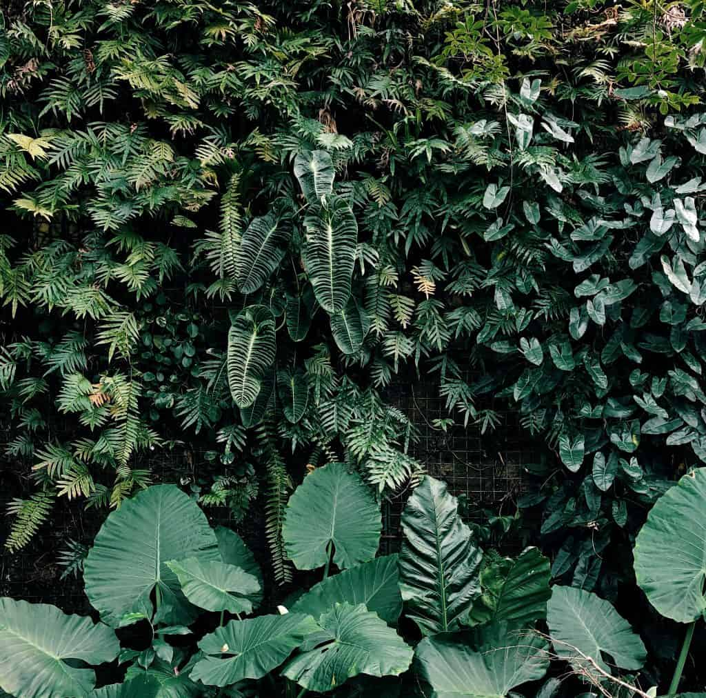 a wall of leaves at a botanical garden